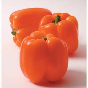 Paprika 'Gourmet'