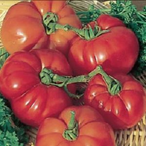 Tomat 'Supermarmande'