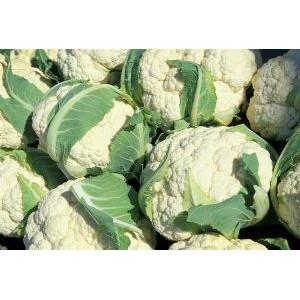 Brassica oleracea var. botrytis / Lillkapsas